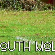 A & L Taxis sponsor South Molton Under 15's Football Club